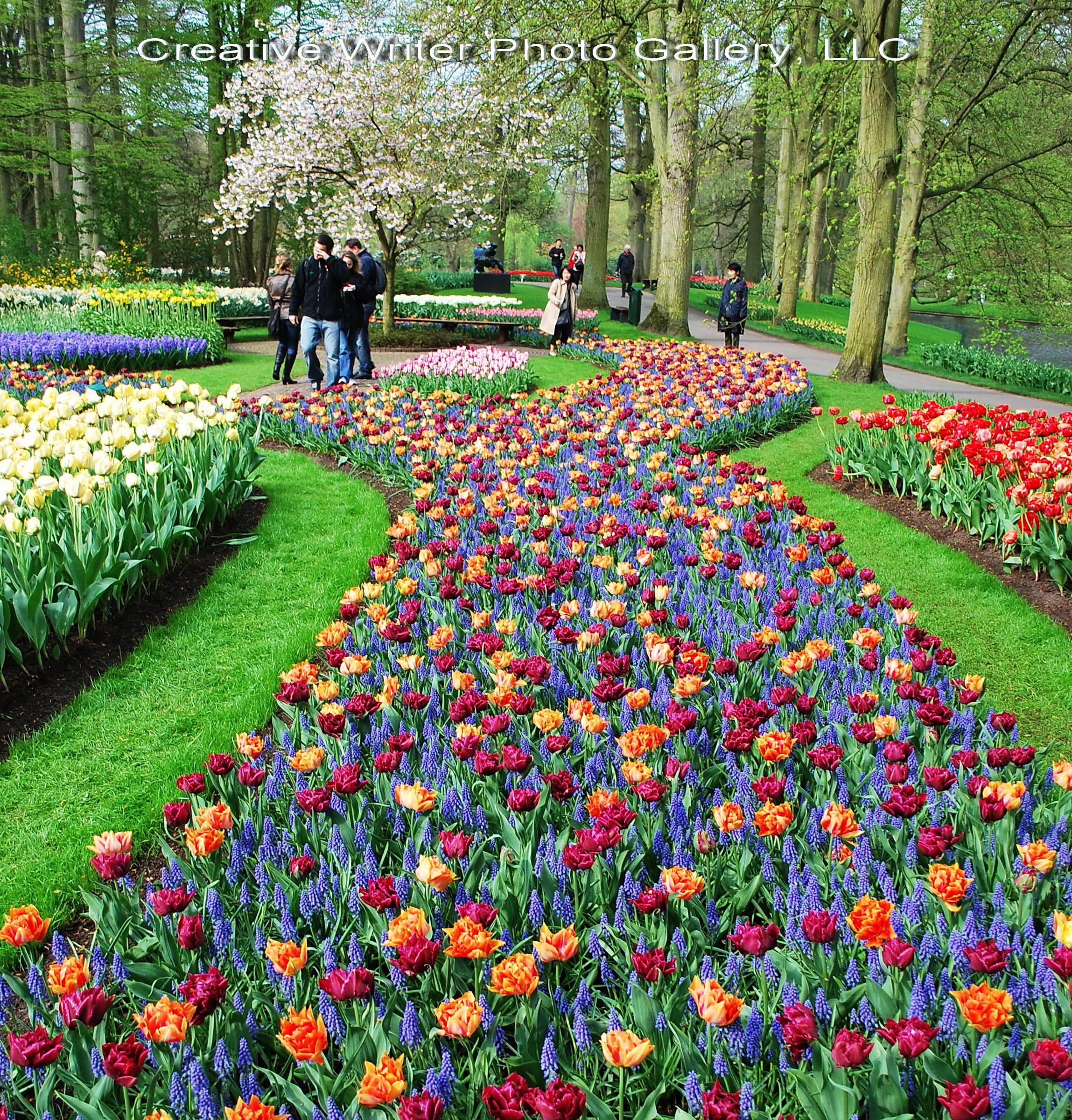 أمستردام الهولنديه عاصمة الزهور الكاتب All Time مدينة أمستردام في